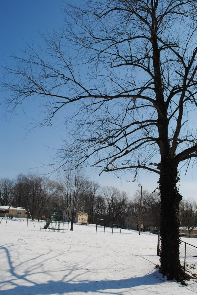 Sunny Snow day