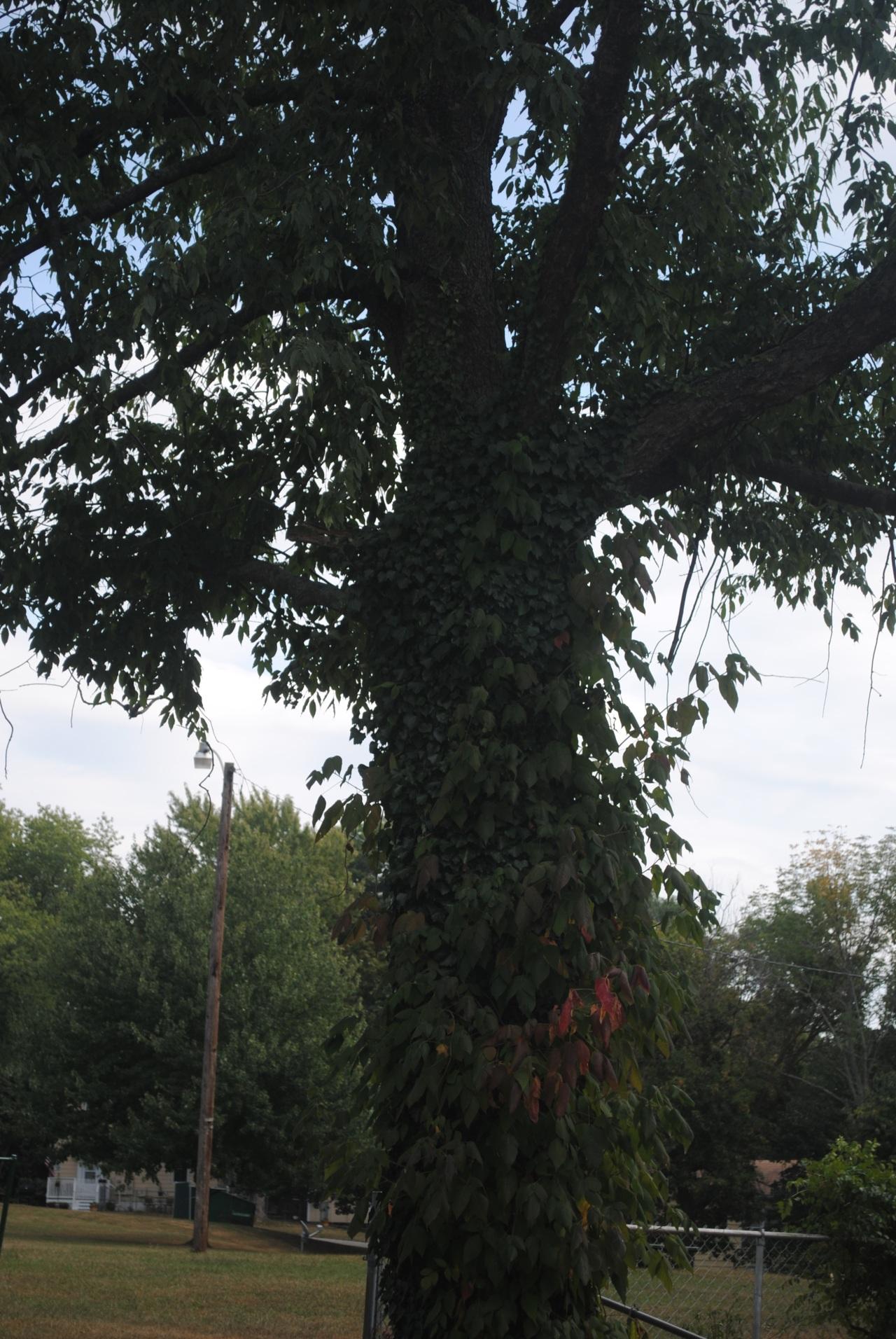 9/18/2013