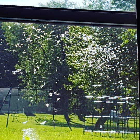 View of park from window